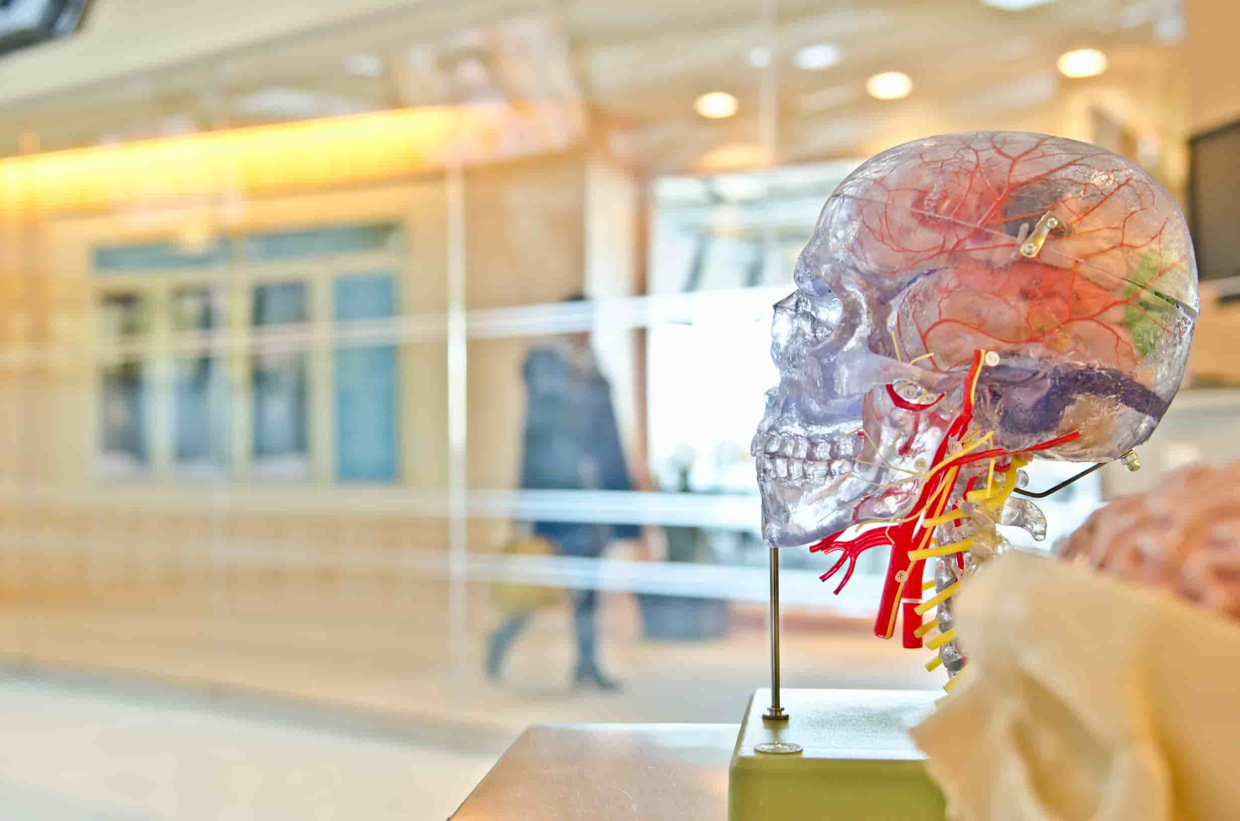 El cerebro humano. Unsplash (Jesse Orrico)